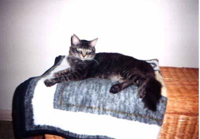 tessa's blanket